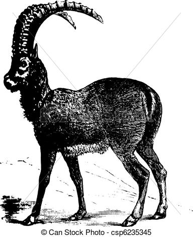 Ibex clipart #1, Download drawings