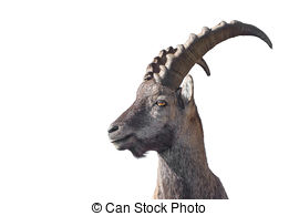 Ibex clipart #2, Download drawings
