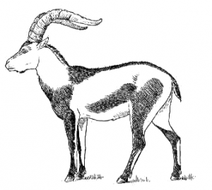 Ibex clipart #11, Download drawings