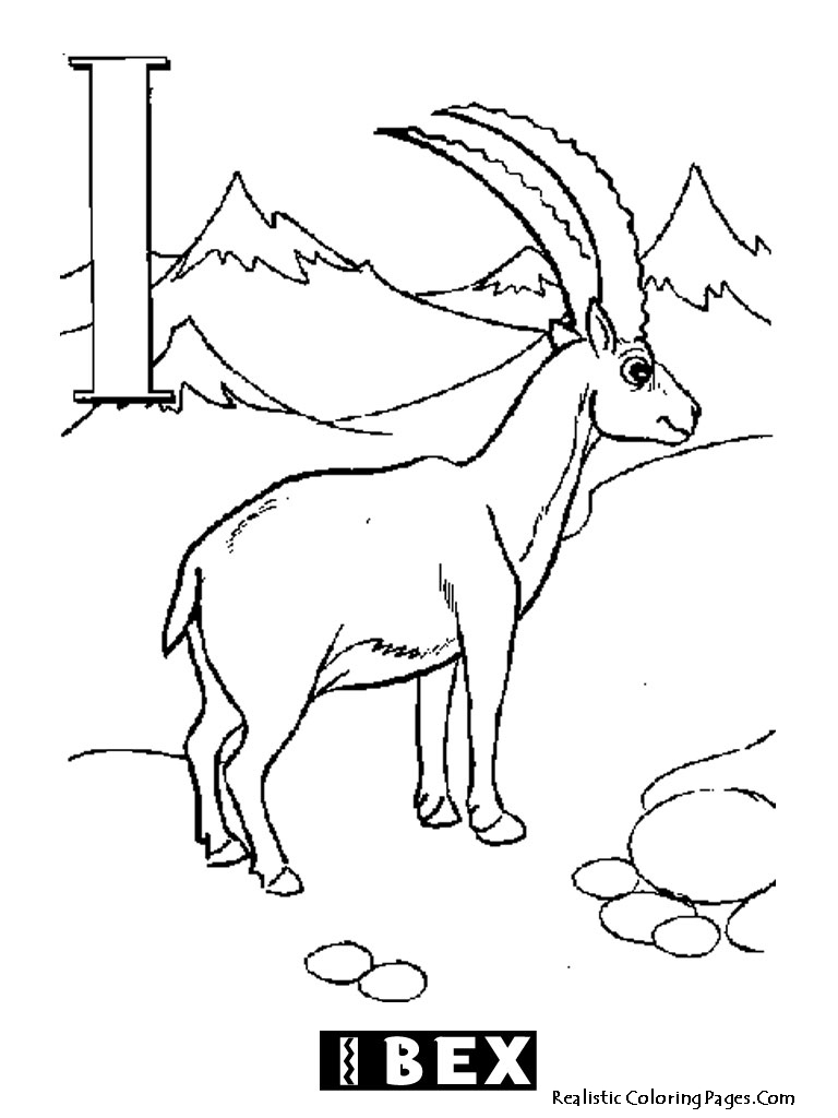 Ibex coloring #8, Download drawings