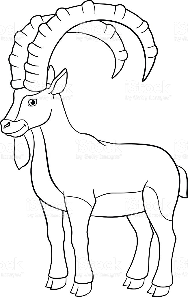 Ibex Coloring Pages
