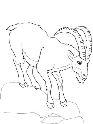 Ibex coloring #5, Download drawings