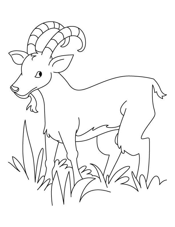 Ibex coloring #20, Download drawings
