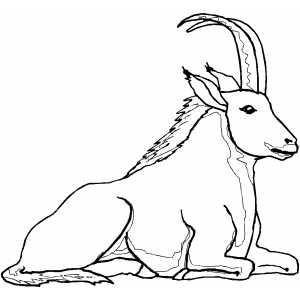 Ibex coloring #15, Download drawings
