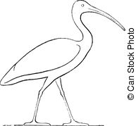 Ibis clipart #13, Download drawings