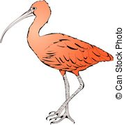 Scarlet Ibis clipart #3, Download drawings