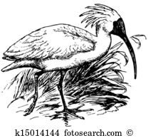 Ibis clipart #2, Download drawings