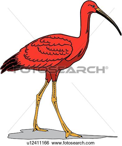 Scarlet Ibis clipart #2, Download drawings