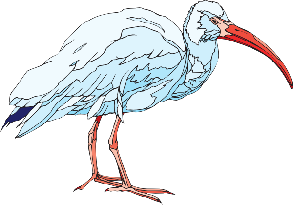 Ibis clipart #3, Download drawings