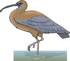Ibis clipart #16, Download drawings
