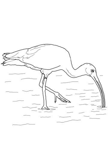 Scarlet Ibis coloring #14, Download drawings