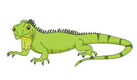 Iguana clipart #14, Download drawings