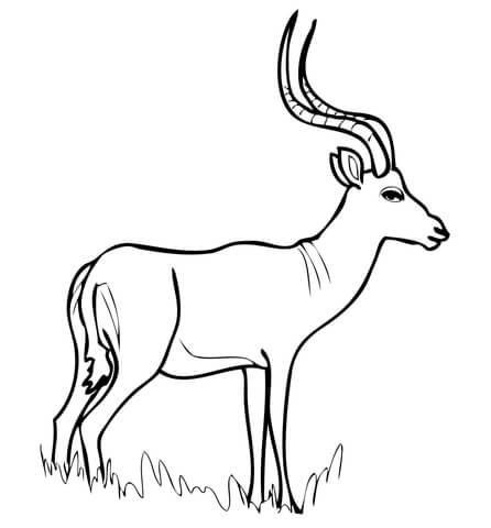 Impala coloring #15, Download drawings