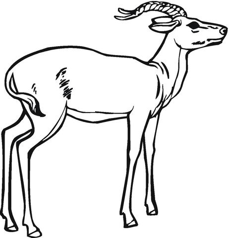 Impala coloring #12, Download drawings