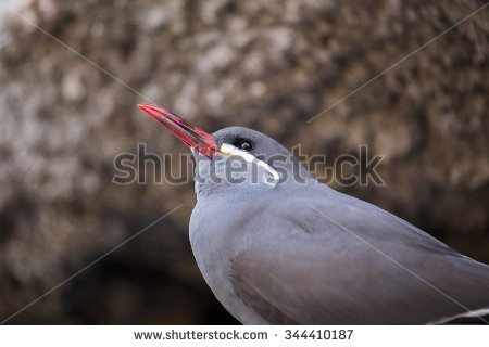 Inca Tern clipart #10, Download drawings