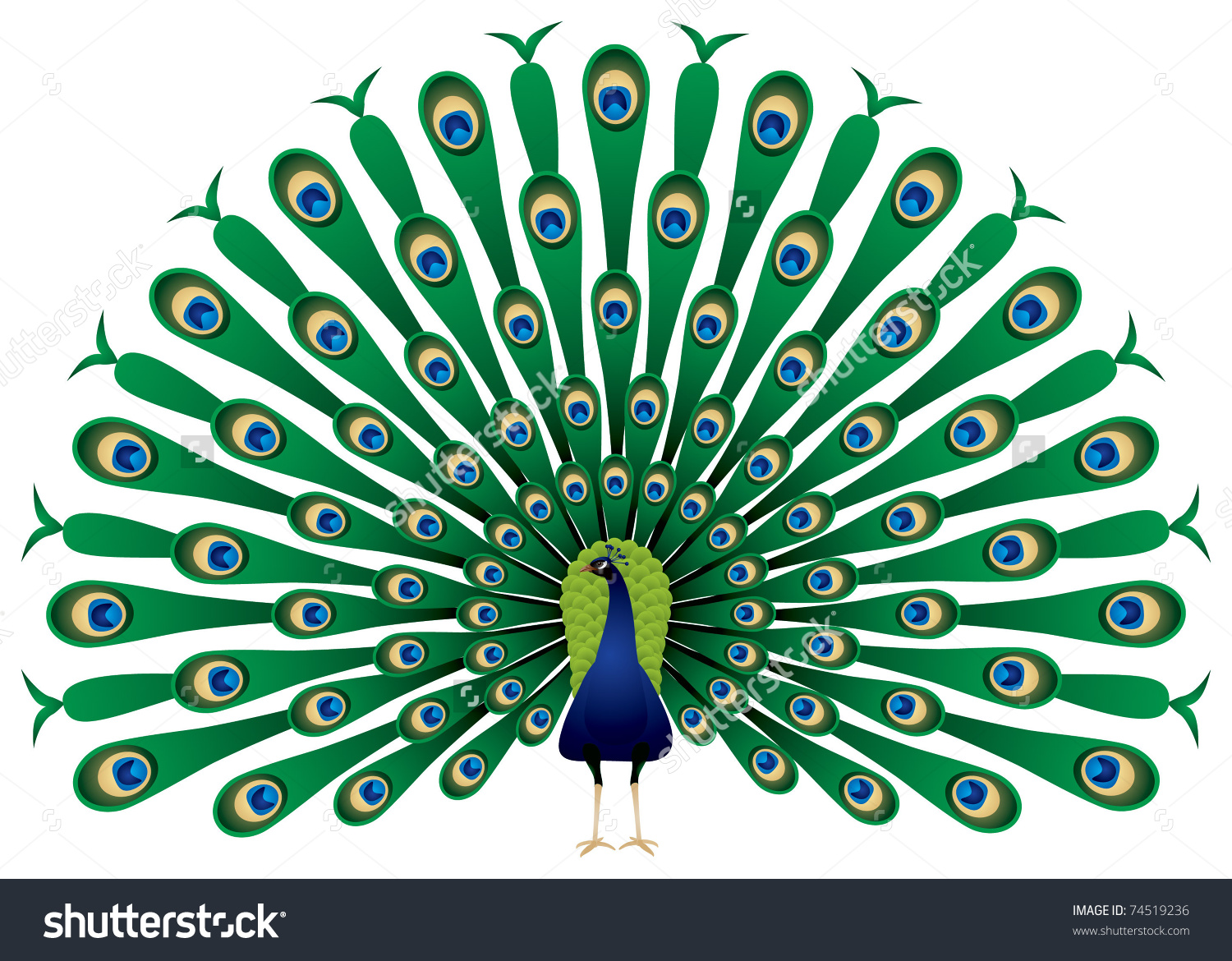 Indian Peafowl clipart #2, Download drawings