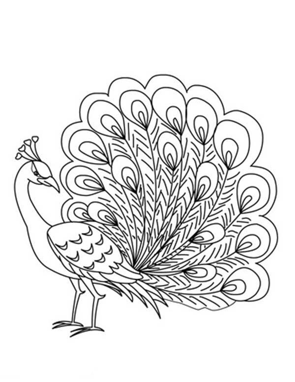 Peafowl coloring #20, Download drawings