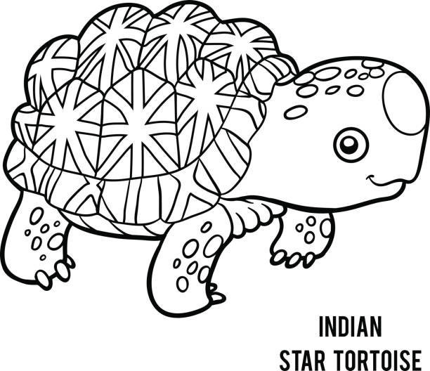 Indian Star Tortoise clipart #10, Download drawings
