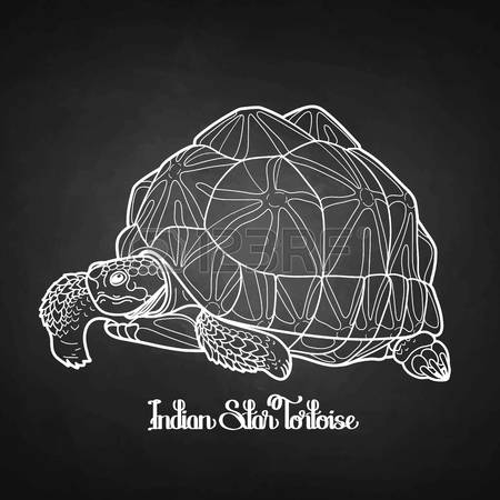 Indian Star Tortoise clipart #6, Download drawings