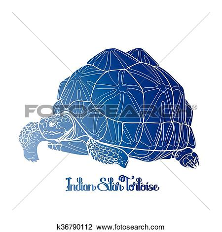 Indian Star Tortoise clipart #5, Download drawings