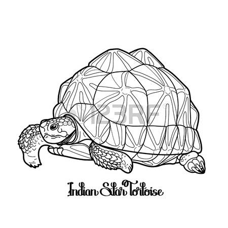 Indian Star Tortoise clipart #15, Download drawings