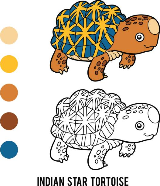 Indian Star Tortoise clipart #13, Download drawings