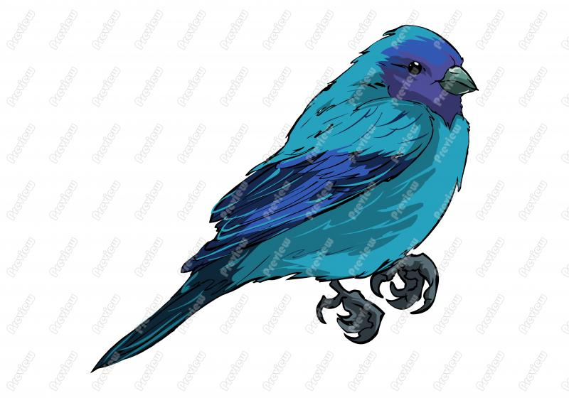 Indigo Bunting clipart #19, Download drawings