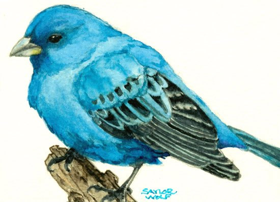 Indigo Bunting clipart #3, Download drawings