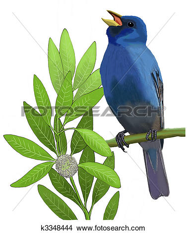 Indigo Bunting clipart #14, Download drawings