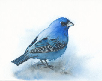 Indigo Bunting clipart #13, Download drawings