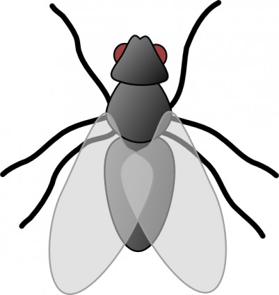 Bug clipart #10, Download drawings