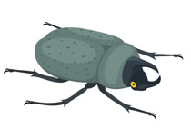 Insect clipart #16, Download drawings