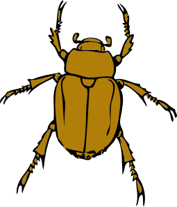 Insect clipart #10, Download drawings