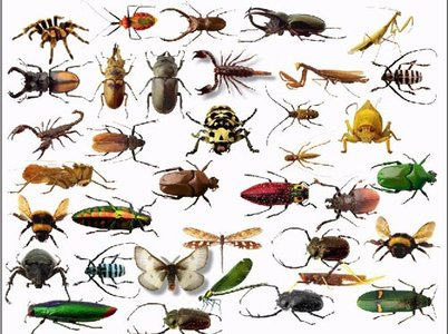 Insect clipart #12, Download drawings