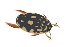 Insect clipart #9, Download drawings