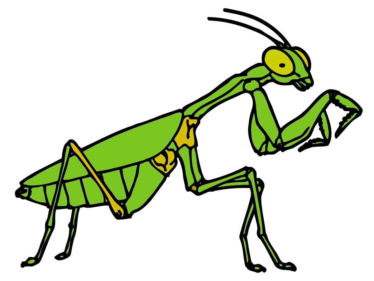 Praying Mantis clipart #14, Download drawings