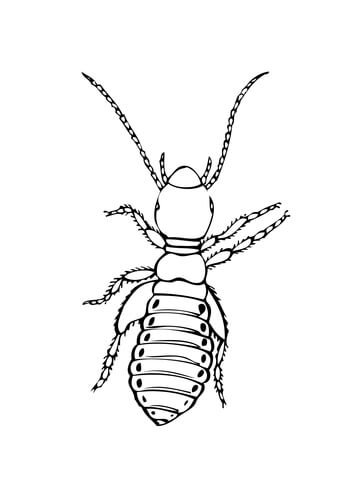 Insect coloring #10, Download drawings