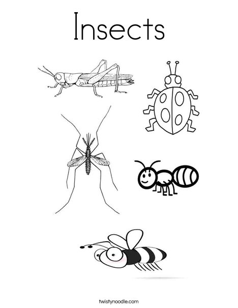 Insect coloring #14, Download drawings