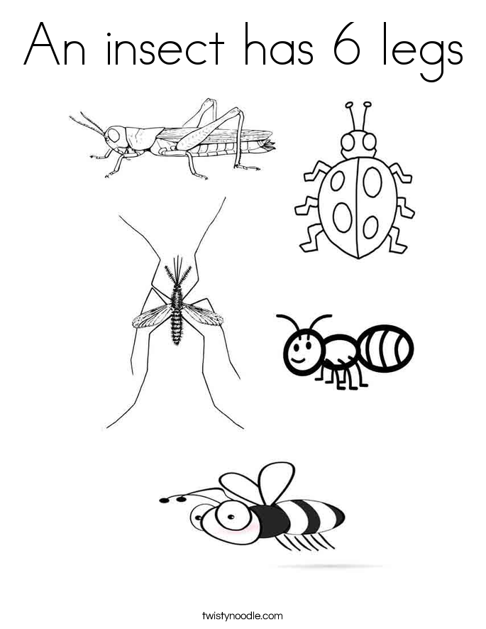 Insect coloring #8, Download drawings