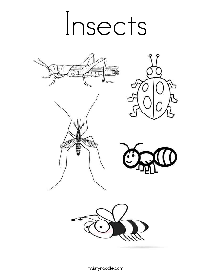 Insect coloring #20, Download drawings