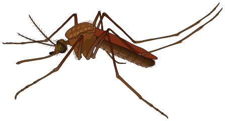 Mosquito svg #20, Download drawings