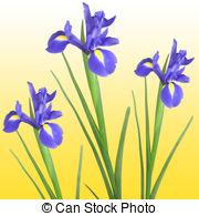 Iris clipart #13, Download drawings