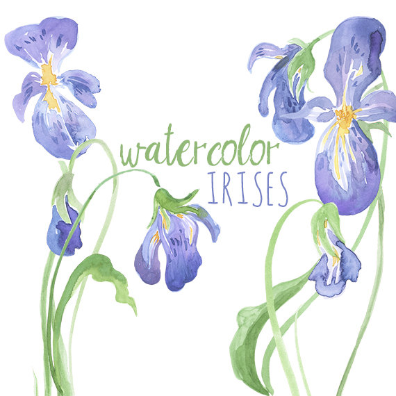 Iris clipart #8, Download drawings