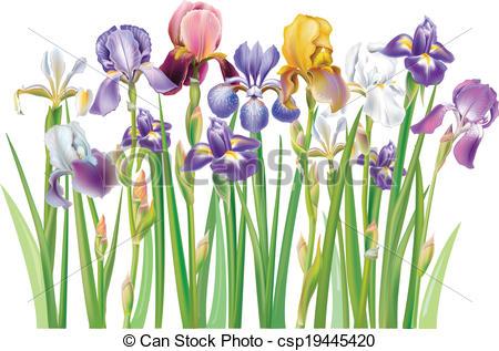 Iris clipart #12, Download drawings