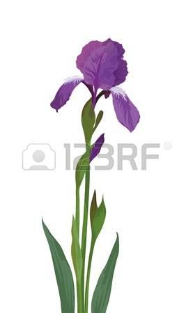 Iris clipart #4, Download drawings