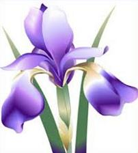 Iris clipart #19, Download drawings