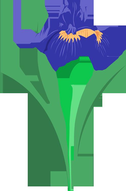 Iris clipart #7, Download drawings