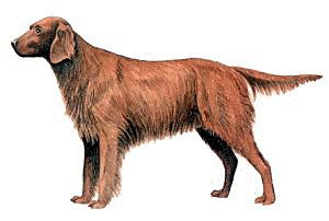 Red Setter clipart #20, Download drawings