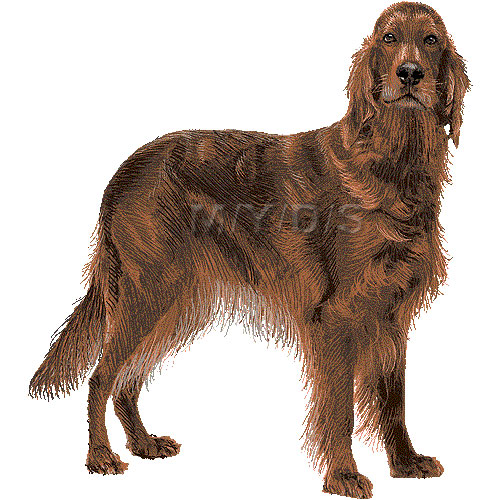 Irish Setter clipart #3, Download drawings