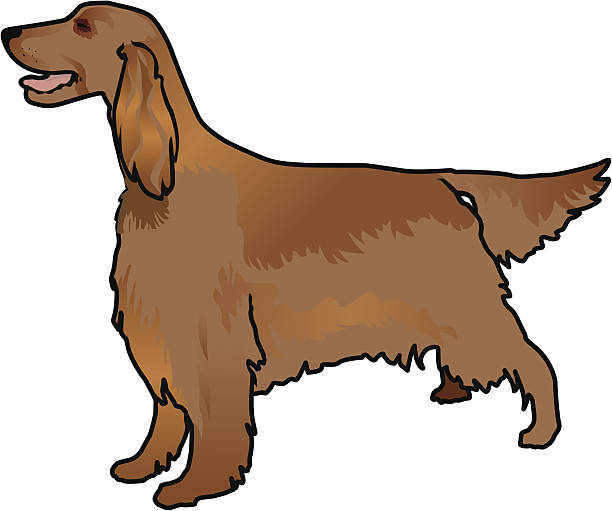 Red Setter clipart #11, Download drawings